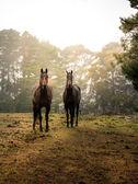 ファームの馬 — ストック写真