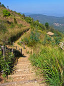 Walkway on Mon Jam hill at Chiang Mai, Thailand — Foto Stock