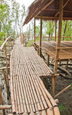 Bamboo walkway in Mangrove forest at Petchabuti, Thailand — Stock Photo