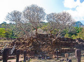 Pagoda tree at Wat Phu Si at Jam pa sak, Laos — Stock Photo