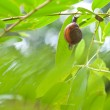 Small snail on the tree — Stock Photo