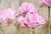 Elaborate pink lotus for worship buddha — Stock Photo