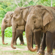 Family of elephant in forest — Stock Photo #32679043