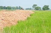 Rijst geplaatst met hut in thailand — Stockfoto