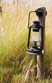 The flower of Imperata cylindrical Beauv grass with lamp — Stock Photo