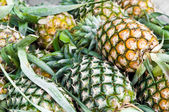 The group of pineapple in Thailand — Stock Photo
