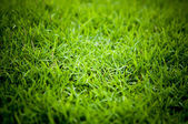 Fresh grass in the field — Stock Photo