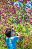 A man with camera in the Wild Himalayan Cherry — Stok fotoğraf