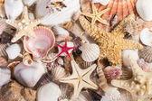 Deniz kabukları — Stok fotoğraf