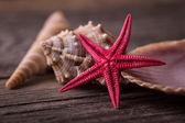 Röd sjöstjärna med seashell — Stockfoto