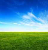 Image of green grass field and bright blue sky — Stock Photo