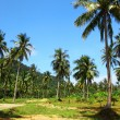 Stok fotoğraf: Image of cultivated palms in tropics