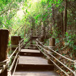 Stock Photo: Image of stairway in jungle