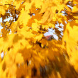 Autumn leaves background. Selective focus — Stock Photo
