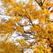 Stock Photo: Bright autumn background. Selective focus