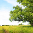 Summer landscape with green grass, road and old tree — Stock Photo