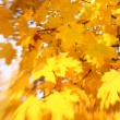 Stock Photo: Autumn leaves background. Selective focus