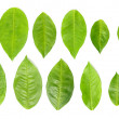 11 green leaves — Stock Photo