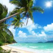 Coconut palms and beach in Thailand — Stock Photo