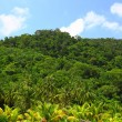 Stock Photo: Image of jungle canopy