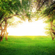 Sun shining through arc of trees — Stock Photo #29726809