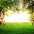 Stock Photo: Sun shining through arc of trees