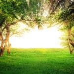 Sun shining through arc of trees — Stock Photo