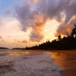 Coconut palms on sand beach in tropic on sunset — Stock Photo
