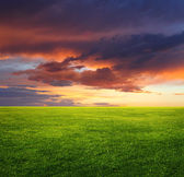 Image of green grass field and beautiful evening sky — Stock Photo
