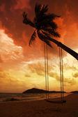 Coqueiro com oscilações na praia de areia no trópico na sunset — Fotografia Stock