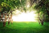 阳光穿过树木的弧 — 图库照片