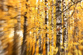 Bright autumn background. Selective focus — Stock Photo