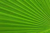 Image of green palm leaf colseup — Stock Photo