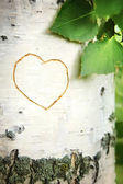 Picture of heart curved on a birch — Stock Photo