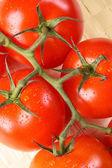 Ripe tomato branch — Fotografia Stock