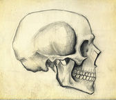 Sketch of skull — Stock Photo