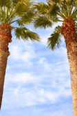Image of two palms in front of the sky — Stock Photo