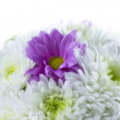 Spring Flower bouquet — Stock Photo