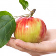 Stock Photo: Ripe juicy apple with leaf on hand