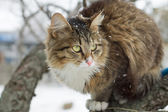 Beautiful striped cat sitting in the snow — Stok fotoğraf