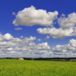Green field under the blue sky — Stock Photo