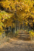 The path in the oak grove — Stockfoto