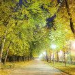 Foto Stock: Night city park
