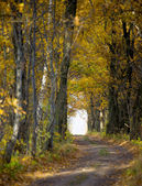 Path in oak grove — Foto Stock