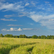 Green field with road and blue sky — Stock Photo