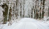 Snow oak alley — Stock Photo