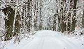 雪のオークの路地 — ストック写真