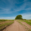 Stock Photo: Country road along field
