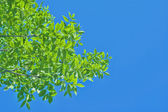 Tree top branches against the sky — Stock Photo