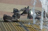 Pigeons in city fountain — Stock Photo